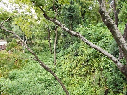 犬山城 空堀